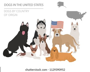 Map of american dog breeds. Info graphic template. Vector illustration