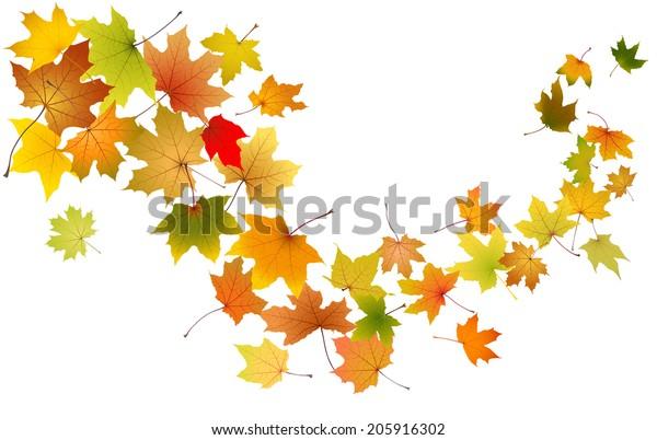 楓の秋の落ち葉 ベクターイラスト のベクター画像素材