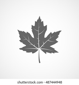 Maple Leaf Flat Icon On White Background
