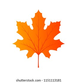 Maple leaf foliage Canada. Colorful vector beautigul element isolated banner. 'Red fall decoration september flora. Garden background icon closeup. Environment golden sign summer. Orange flat season.