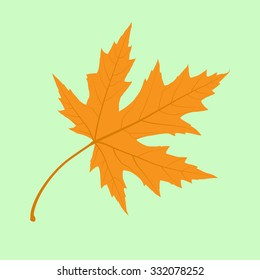 Maple Leaf. Illustration.