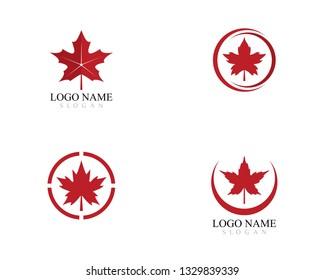 Maple leaf logo template vector icon illustration design