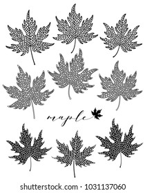 Maple leaf set. Black and white isolated realistic objects.  Vector botanical illustration