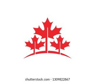 Maple leaf vector illustration design Logo template