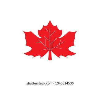 Maple leaf vector illustration design Logo template - Vector
