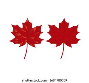 Maple leaf vector illustration, isolated  on white.