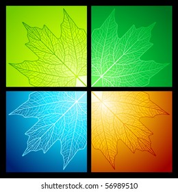 Maple leaf vein patterns for all seasons