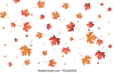 autumn leaves fall pattern composition background stock photo edit