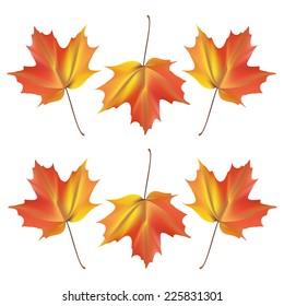 maple leaves, vector