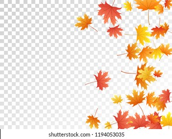 Maple leaves vector, autumn foliage on transparent background. Canadian symbol maple red orange gold dry autumn leaves. Vivid tree foliage october background pattern.
