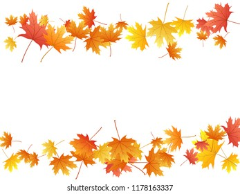 Maple leaves vector background, autumn foliage on white graphic design. Canadian symbol maple red yellow gold dry autumn leaves. Abstract tree foliage november seasonal background.