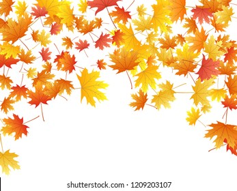 Maple leaves vector background, autumn foliage on white illustration. Canadian symbol maple red orange gold dry autumn leaves. Forest tree foliage vector october season specific background.