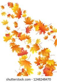 Maple leaves vector background, autumn foliage on white illustration. Canadian symbol maple red orange yellow dry autumn leaves. Botanical tree foliage vector november seasonal background.