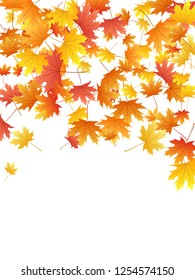 Maple leaves vector background, autumn foliage on white graphic design. Canadian symbol maple red yellow gold dry autumn leaves. Realistic tree foliage vector november season specific background.