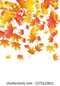 Maple leaves vector background, autumn foliage on white illustration. Canadian symbol maple red orange gold dry autumn leaves. Fantastic tree foliage fall seasonal background pattern.