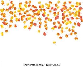 Maple leaves vector background, autumn foliage on white illustration. Canadian symbol maple red orange gold dry autumn leaves. Romantic tree foliage vector october seasonal background.