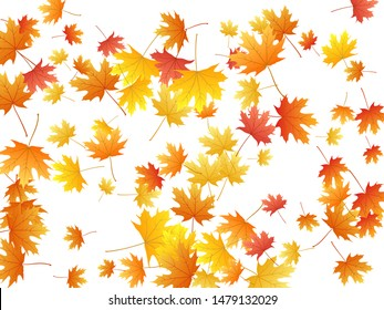 Maple leaves vector background, autumn foliage on white illustration. Canadian symbol maple red orange yellow dry autumn leaves. Cool tree foliage vector november seasonal background.