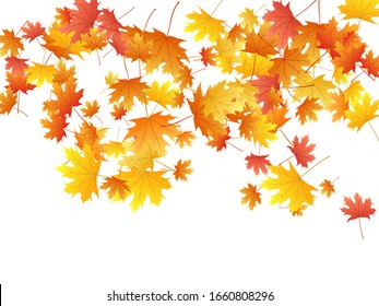 Maple leaves vector background, autumn foliage on white graphic design. Canadian symbol maple red orange yellow dry autumn leaves. Floral tree foliage vector september seasonal background.