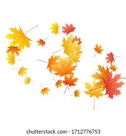 Maple leaves vector background, autumn foliage on white graphic design. Canadian symbol maple red orange gold dry autumn leaves. Stylish tree foliage vector october seasonal background.
