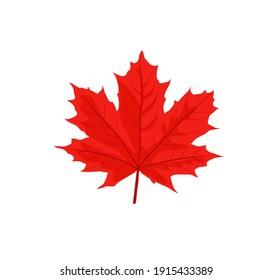 Maple leaves vector illustration. Autumn  Fall leaves maple