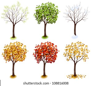 Maple Tree Isometric Trees In Vector Four Seasons Series