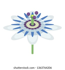 Maracuja flower icon. Isometric of maracuja flower vector icon for web design isolated on white background