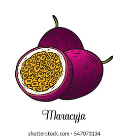 Maracuja passion fruit, bunch. Organic nutrition healthy food. Engraved exotical hand drawn vintage retro vector maracuja illustration. Tropical fruit Isolated on white background