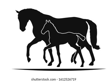 Mare and foal move together, two silhouettes