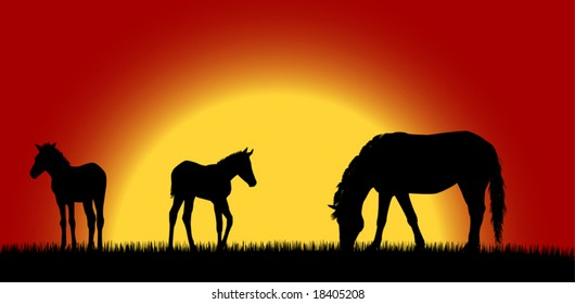 Mare with foals over sunrise