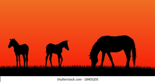 Mare with foals over sunset