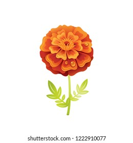 Marigold flower, floral icon. Realistic cartoon cute plant blossom, fall, summer garden symbol. Vector illustration for greeting card, t shirt print, decoration design. Isolated on white background