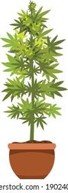 Marijuana oder Cannabis pflanzen in einem Blumentopf. Flaches Design. Cannabis pflanzt in einem Blumenkohl. Grüne Kräuter in einem Topf.