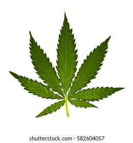 Marijuana or cannabis vector leaf