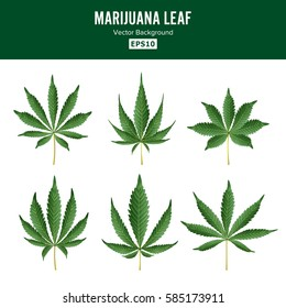Marijuana Green Leaf Vector. Medicinal Herbs Collection. Cannabis Sativa or Cannabis Indica Illustration Isolated On White Background. Graphic Design Element For Web, Prints