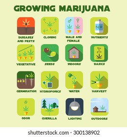 Marijuana growing icon set. Medical cannabis plants germination, odor, vegetative, hydroponics, cloning, seeds, nutrients, indoors, outdoors, lighting, guerilla. Vector illustration in flat style.
