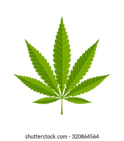 Marijuana hemp (Cannabis sativa or Cannabis indica) leaf on white background