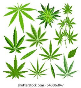 Marijuana hemp pot cannabis leaf vector set. Green medical or drugs hempen leaves like grass.