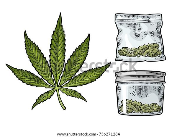 Vector De Stock Libre De Regalías Sobre Hojas De Marihuana