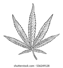 Marijuana leaf. Hand drawn design cannabis leave. Vintage black vector engraving illustration for label, poster, web. Isolated on white background