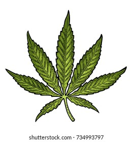 Marijuana leaf. Hand drawn design element cannabis. Vintage color vector engraving illustration for label, poster, web. Isolated on white background