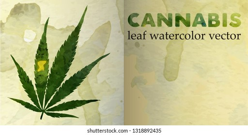 Marijuana leaf on the old watercolor paper. vector image