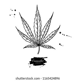 Marijuana leaf vector drawing. Cannabis botanical illustration. Hemp plant sketch. Medical drug. Engraving style object isolated on white background. Great for shop label, emblem, sign, packaging