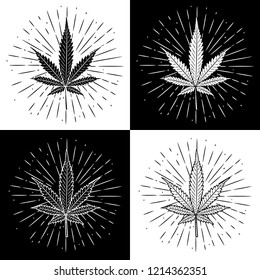 Marijuana leaf. Vector illustration with Cannabis leaf and divergent rays. Used for poster, banner, web, t-shirt print, bag print, badges, flyer, logo design and more.