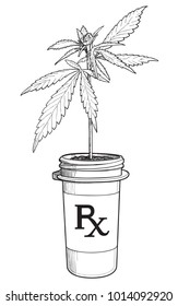 A Marijuana plant growing in a pill bottle as if prescribed by a doctor and given out at a pharmacy.