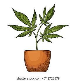 Marijuana plant with leaf in pot. Hand drawn design element cannabis. Vintage black vector engraving illustration for label, poster, web. Isolated on white background