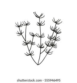 Marine algae drawing. vector illustration
