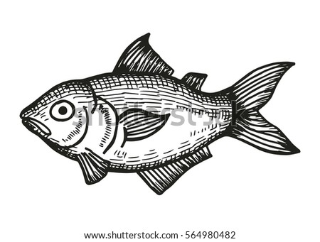 Marine Aquarium Fish Sketch On White Stock Vector Royalty Free