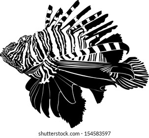 marine aquarium fish Zebra Lionfish