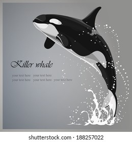 Marine background with a killer whale jumping out of water