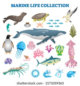 Marine life collection vector illustration. Sea and ocean wild fauna fishes. Swimming underwater creatures in exotic beaches. Fishes, whale and other aqua animals together as diversity visualization.